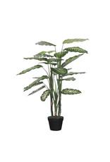 Mica Dieffenbachia in Pot Green - h100xd70cm