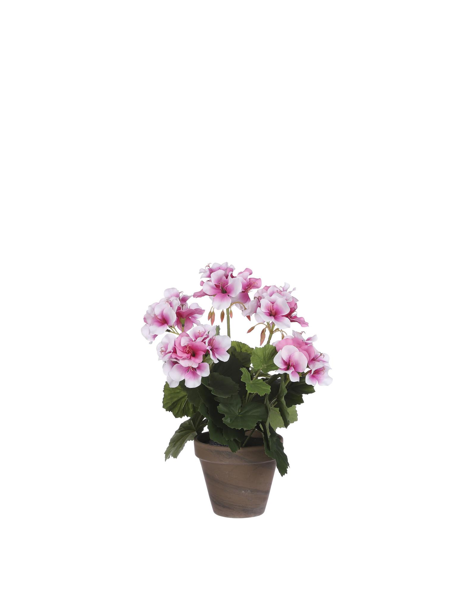 Mica Geranium in Pot Stan Grey d11.5cm - h33xd20cm