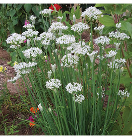 Home Grown Garlic Chives