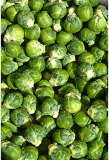 Brussel Sprouts (6 Pack)