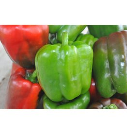 Pepper - California Wonder (6 Pack)