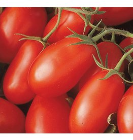 Tomato - La Romma III Red (6 Pack)