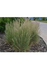 Eldorado Feathered Reed Grass
