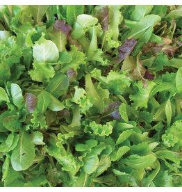 Lettuce - Mix Salad Bowl
