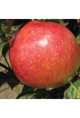 Apple - Prairie Magic - #7