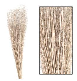 Dijk Coriander Grass - 60-65cm 50gr
