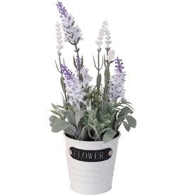 Koopman Plant Lavender In Metal Pot