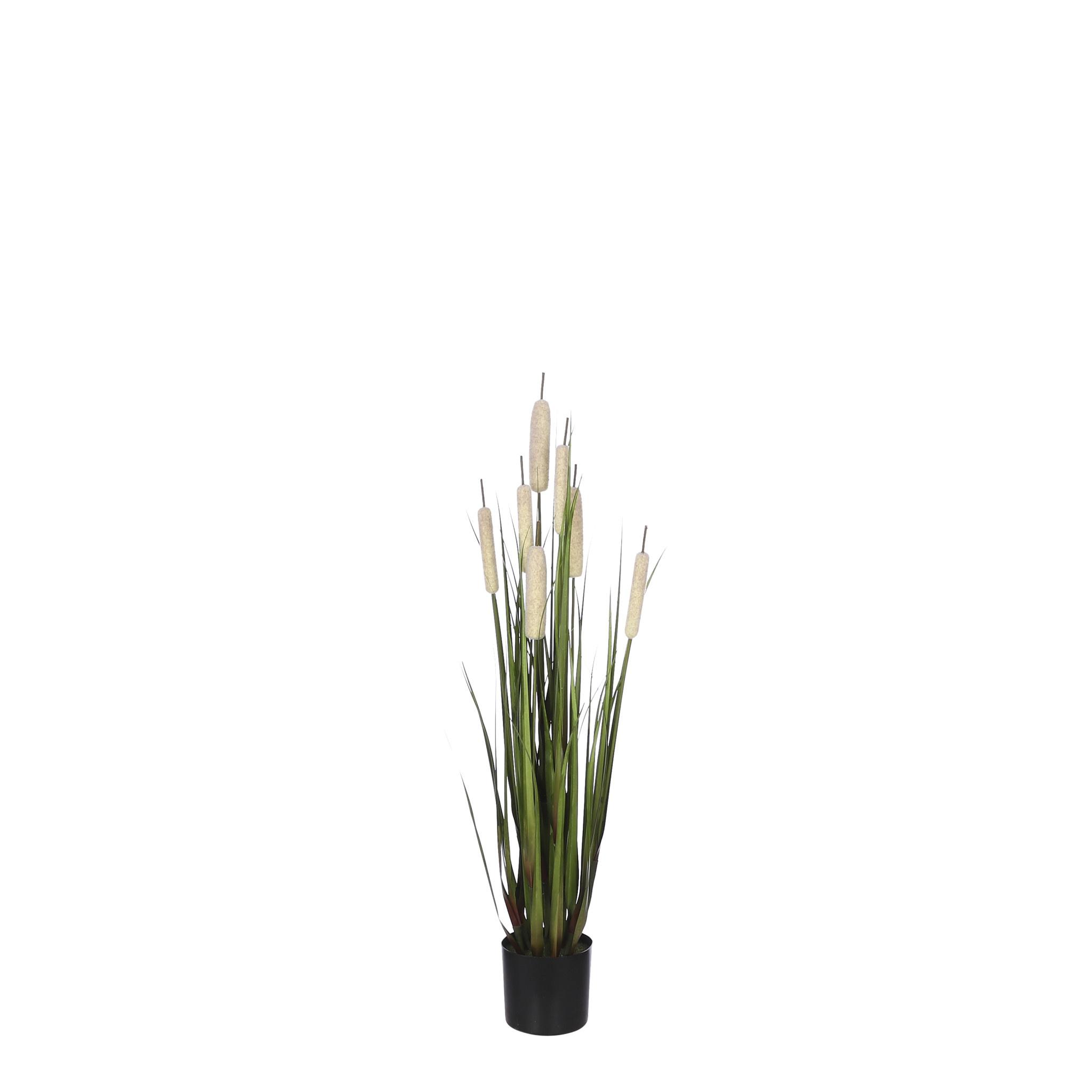 Mica Cattail Grass in Pot - Cream - h90xd25cm
