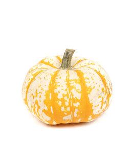 Striped Pumpkin - Large