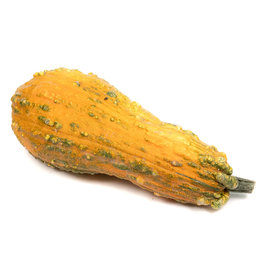 Gourd - Large