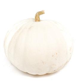 White Pumpkin - Large
