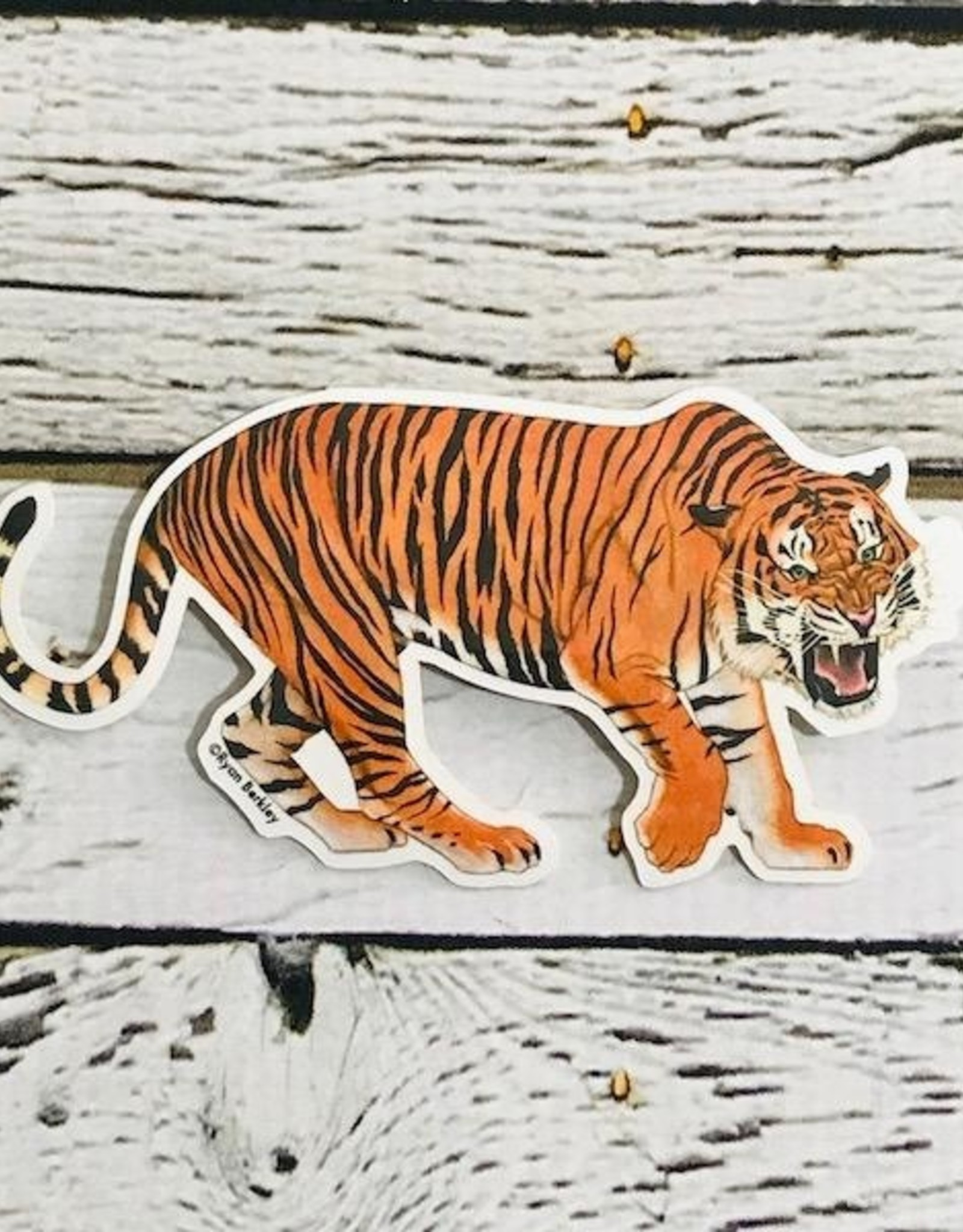 BUYOLYMPIA Tiger Sticker