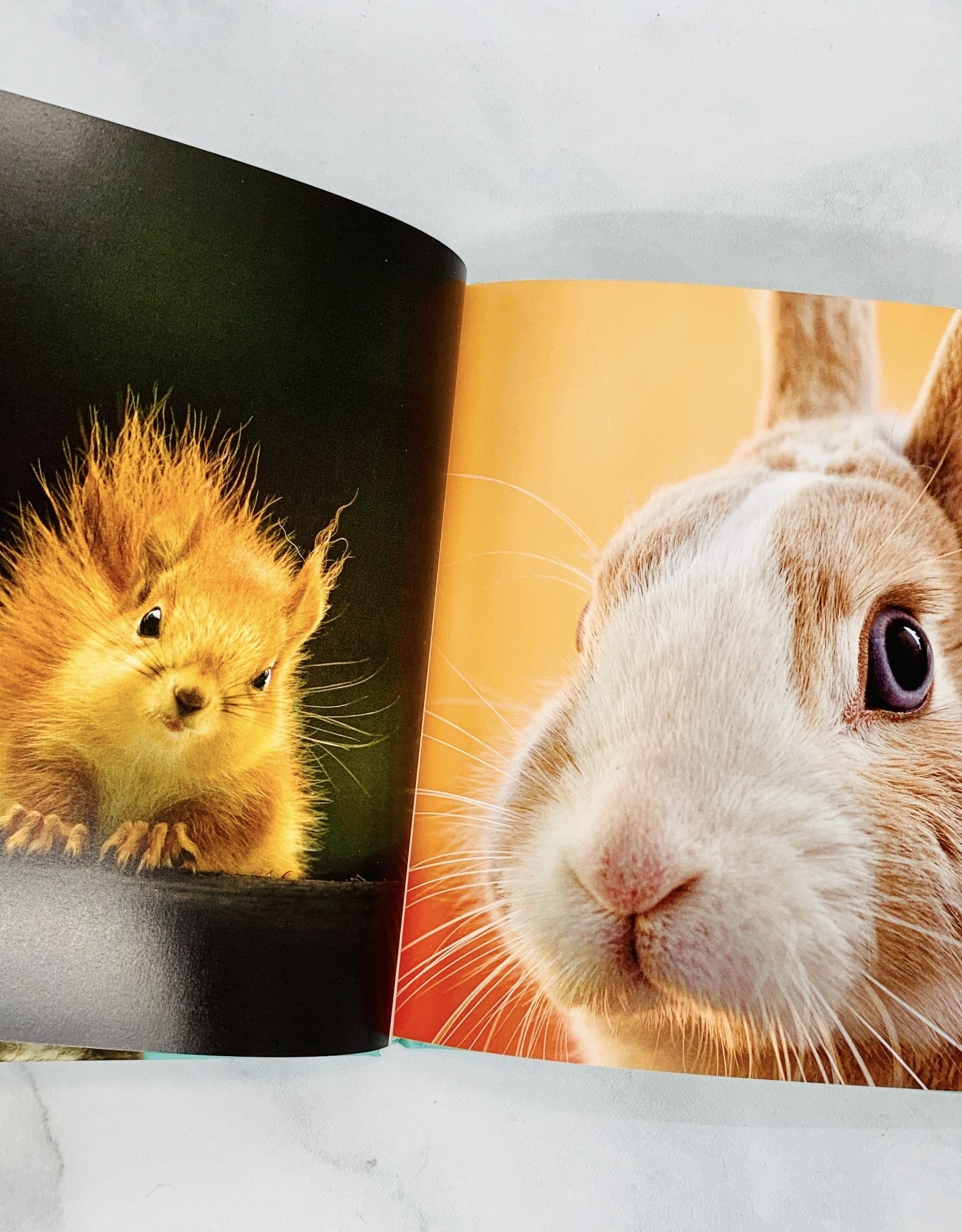 RANDOMHOUSE This Book Is Literally Just Pictures of Cute Animals That Will Make You Feel Better