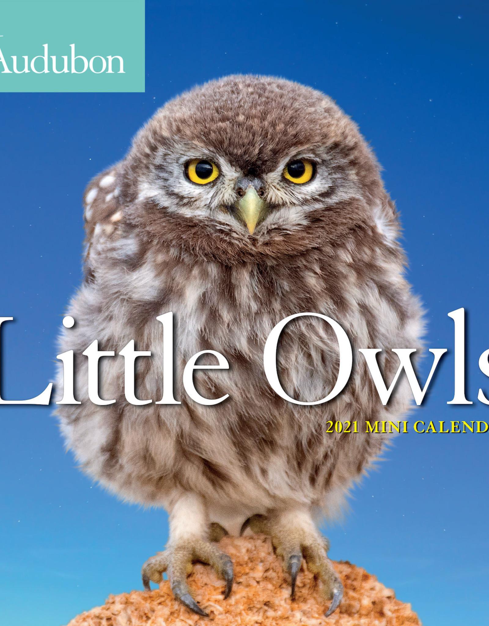 2021 Mini Calendar: Audubon's Little Owls