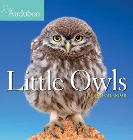 2021 Mini Calendar: Audubon's Little Owls