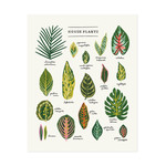 "Little Low Studio House Plants 11""x14"" Print"