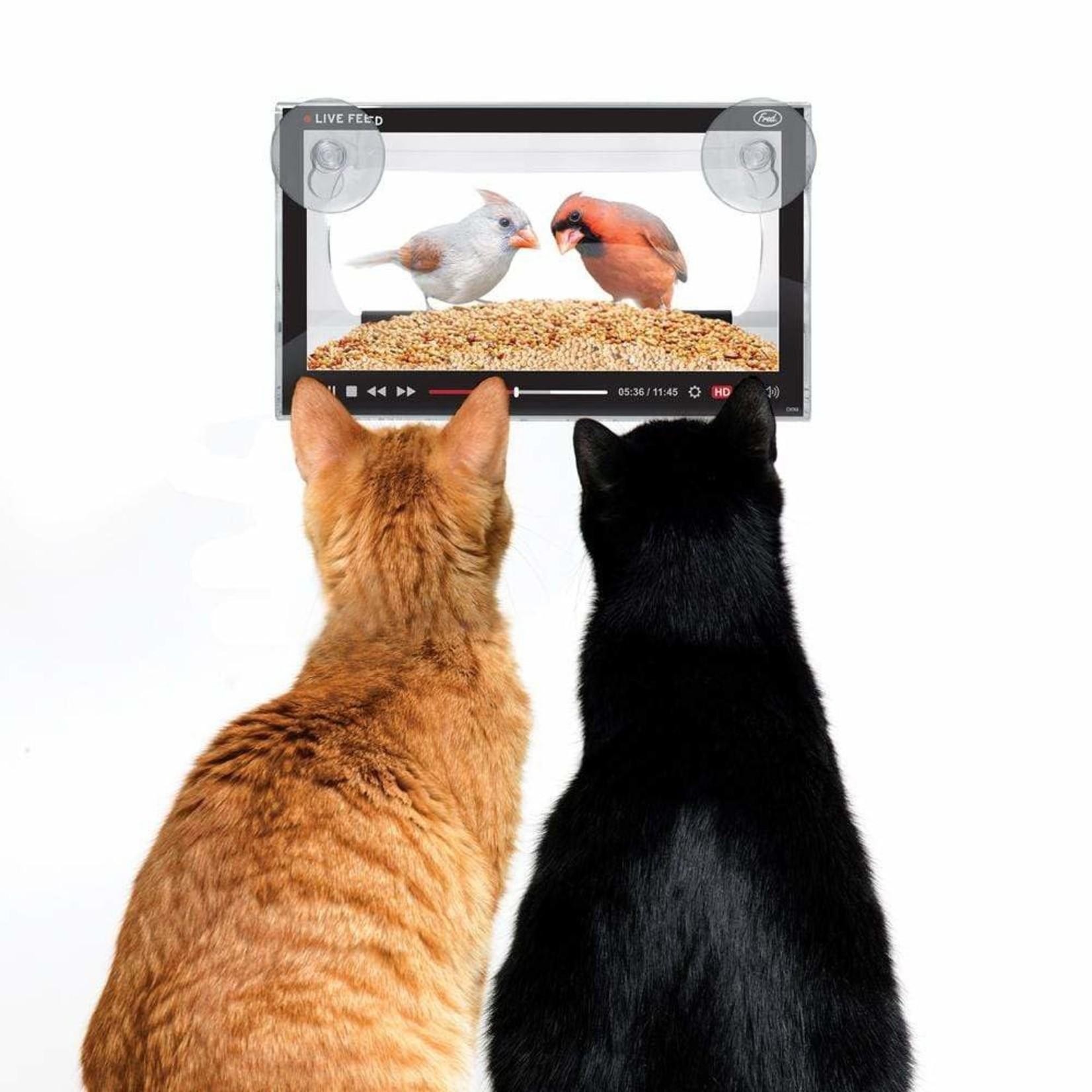 Live Feed Bird Feeder