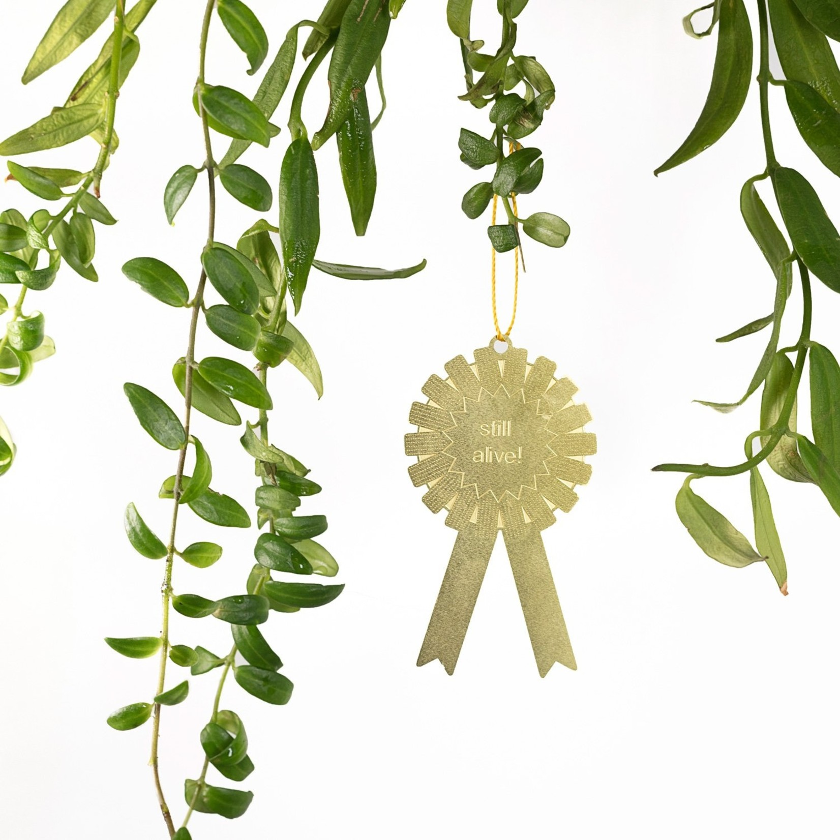 Another Studio for Design Plant Award: