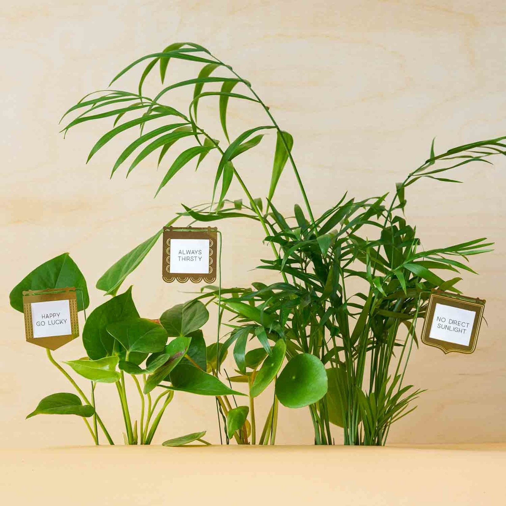 Another Studio for Design Brass Plant Decoration: