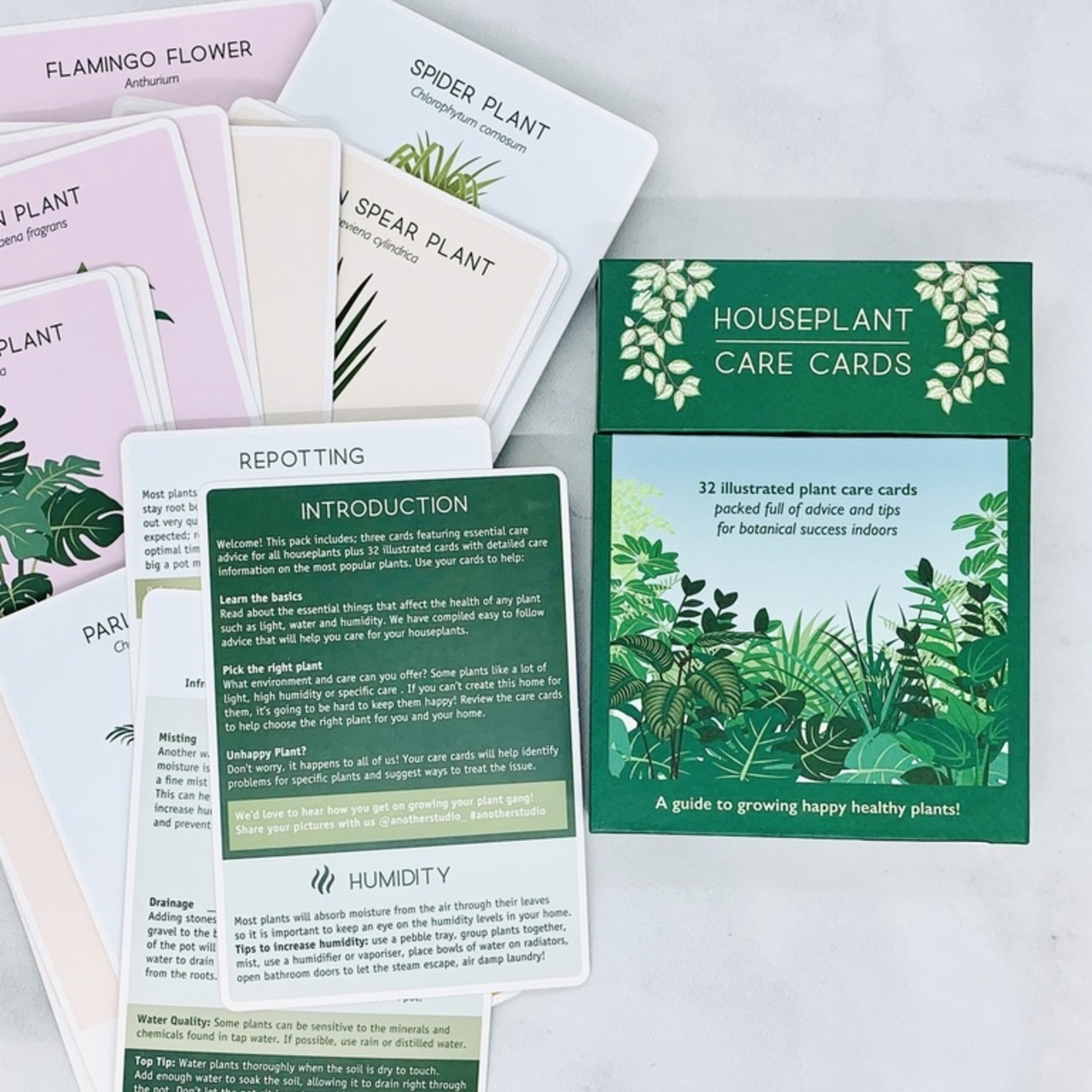 Another Studio for Design Plant Care Cards: