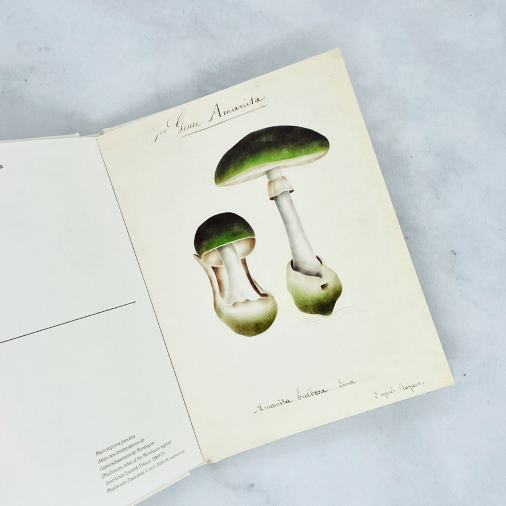 Mushroom Postcards