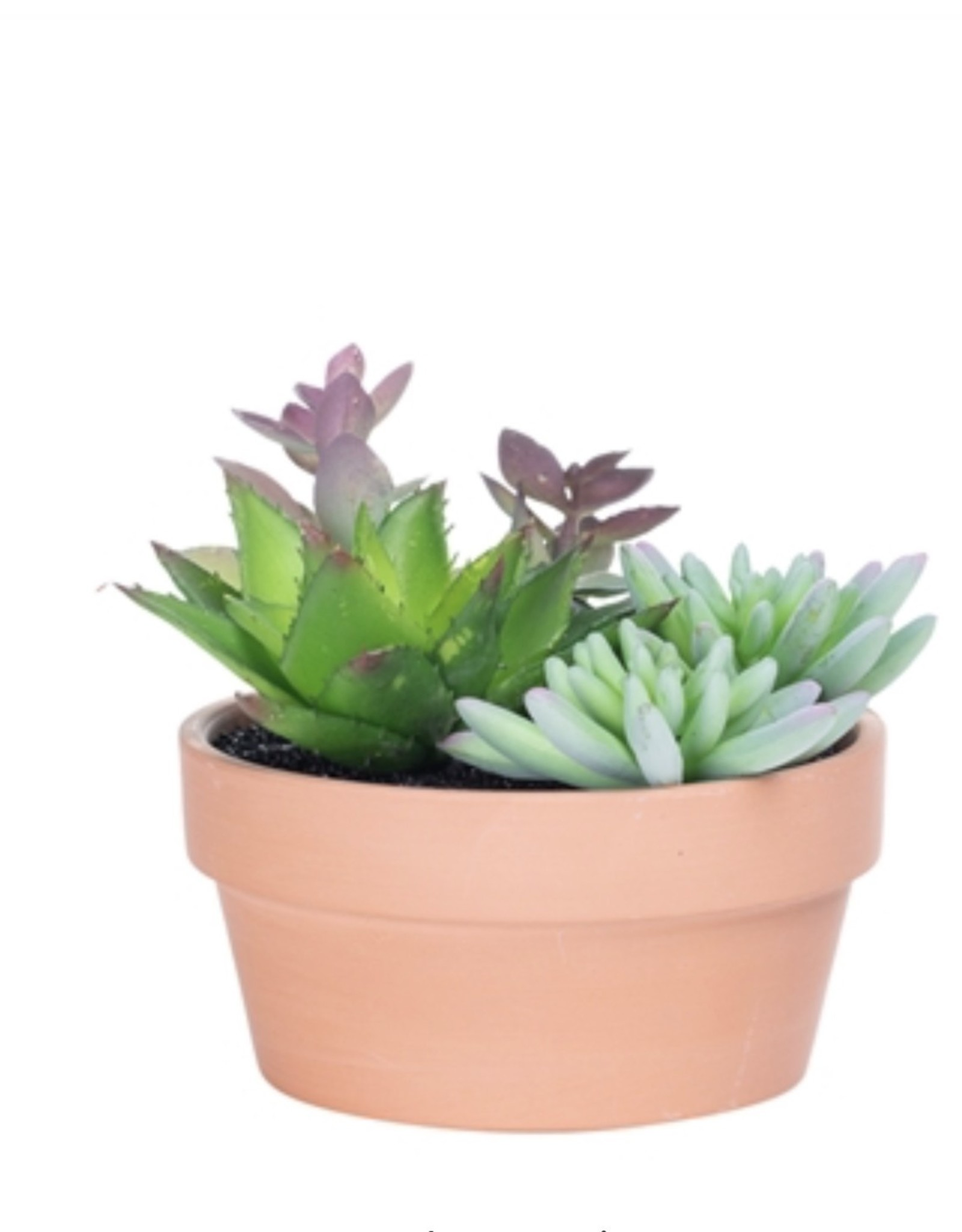 Plant Potted Succulent 5.5'' DIA Terracotta