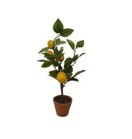 Nostalgia Lemon Tree Nostalgia 778-035