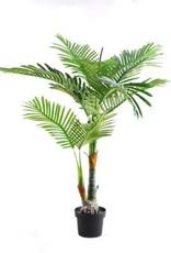 Nostalgia Palm Tree Nostalgia 780-005