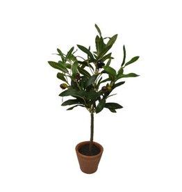 Nostalgia Olive Tree Nostalgia 778-034