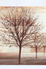 Art Splash Bare Trees