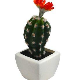 Nostalgia Cactus White Pot 1 Flower Orange