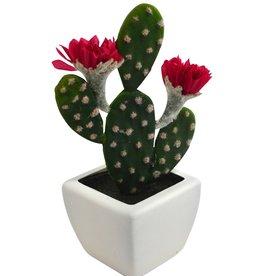 Nostalgia Cactus White Pot 2 Flower