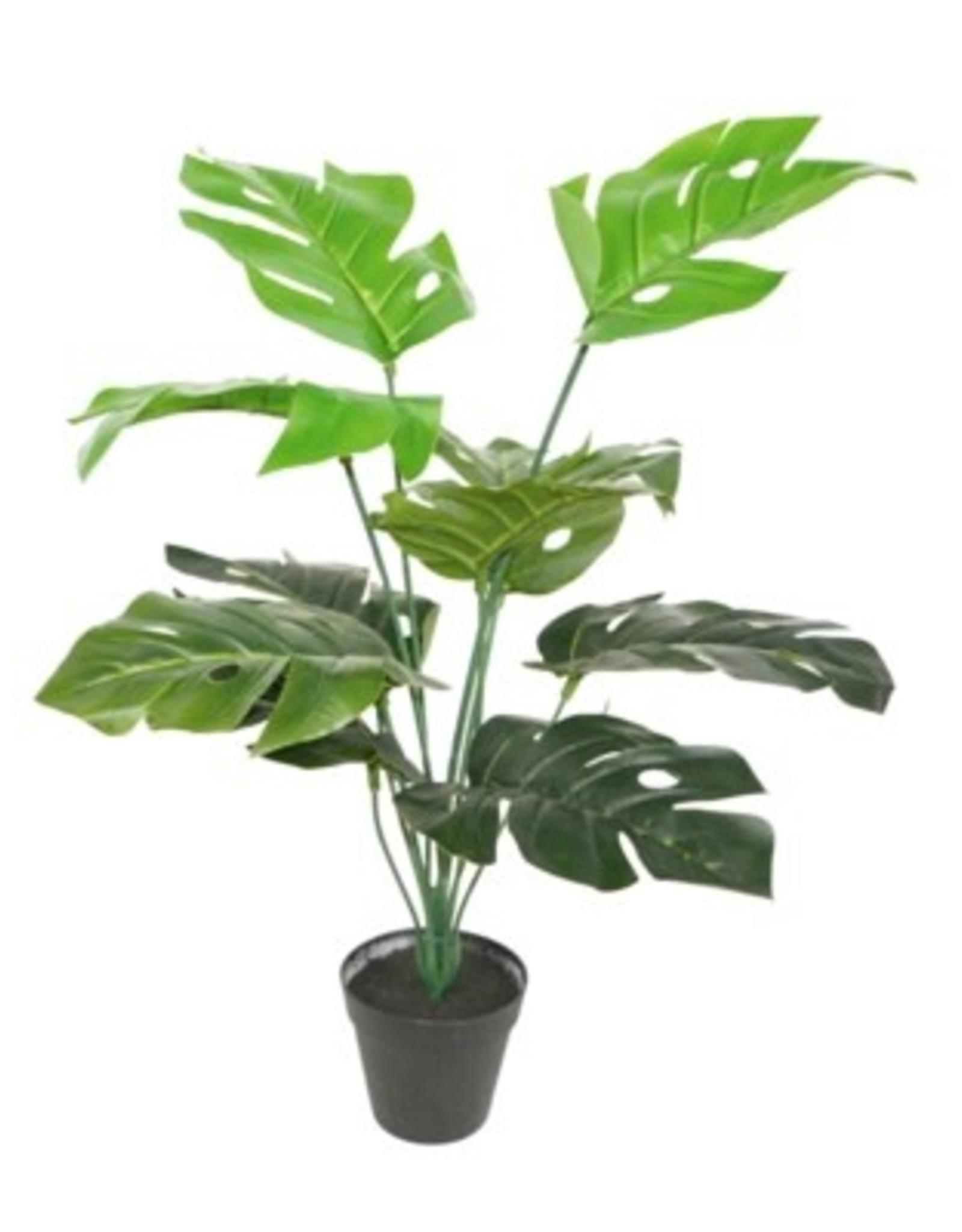 Nostalgia Philodendron Potted Nostalgia 780-011