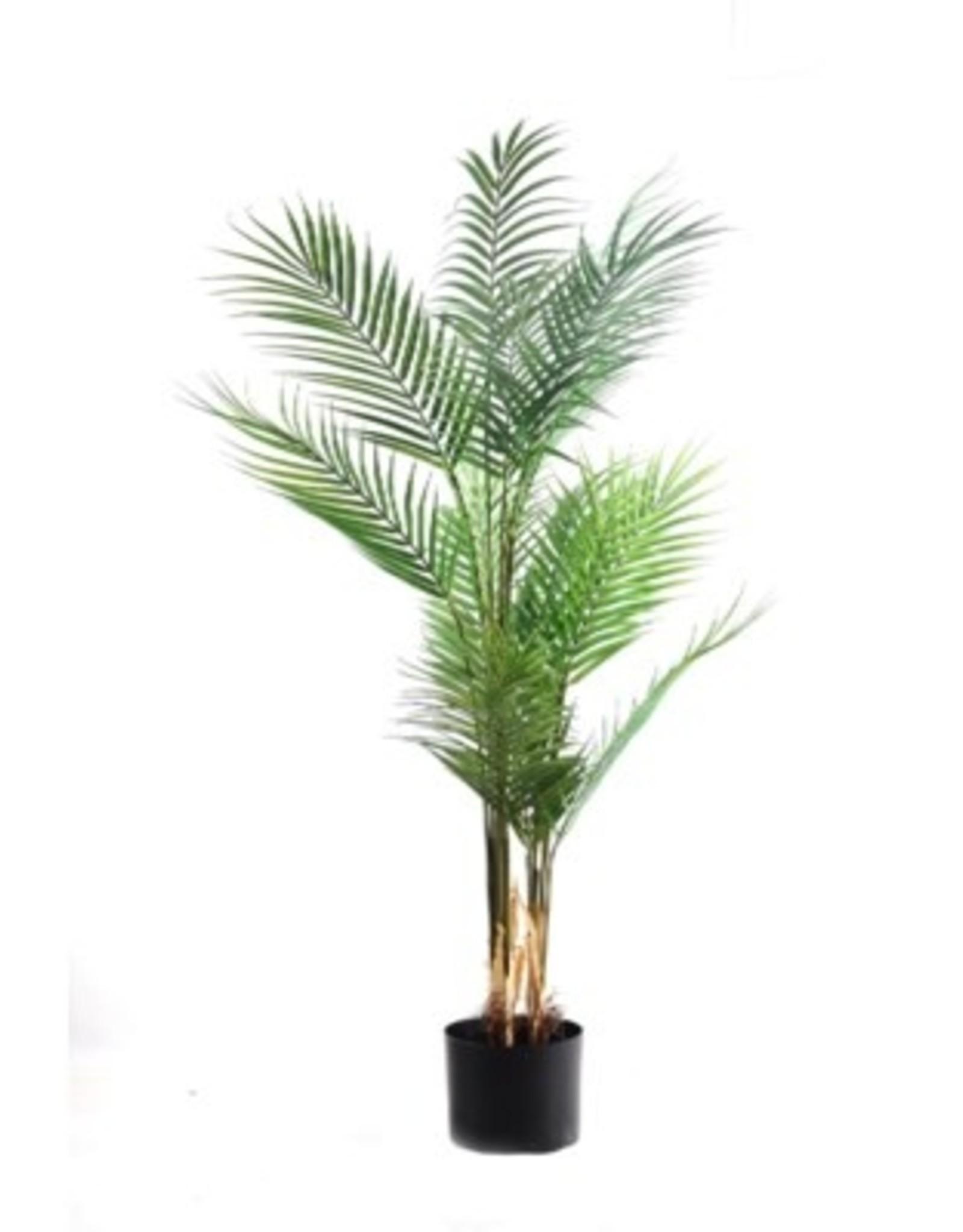 Nostalgia Kwai Tree Nostalgia Potted 780-002