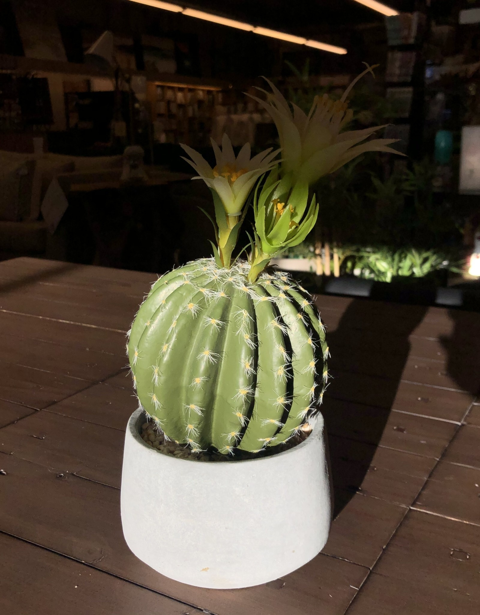 Cactus Torre & Tagus Grey Pot Rounded