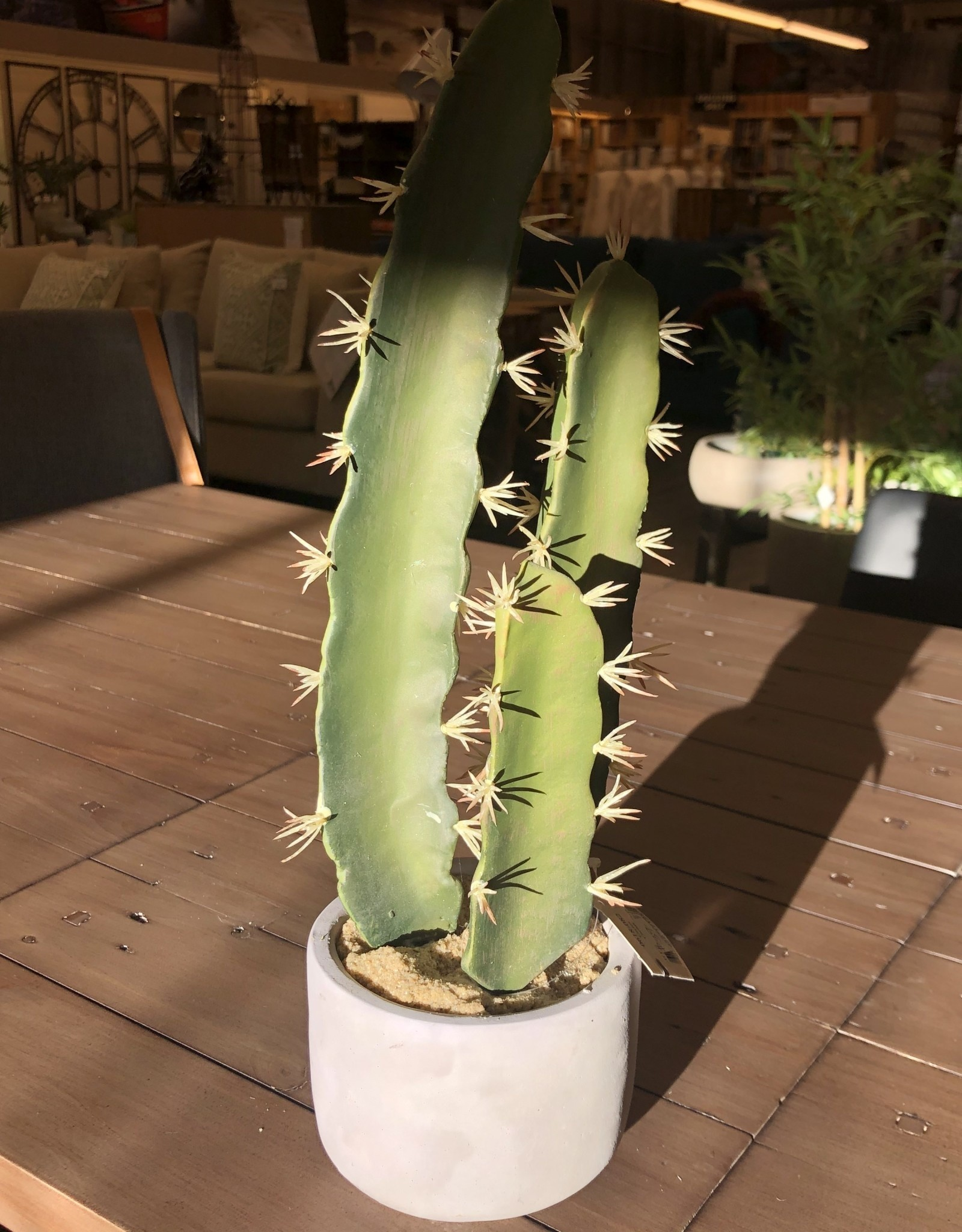 Nostalgia Cactus Nostaglia Tall Taupe Pot