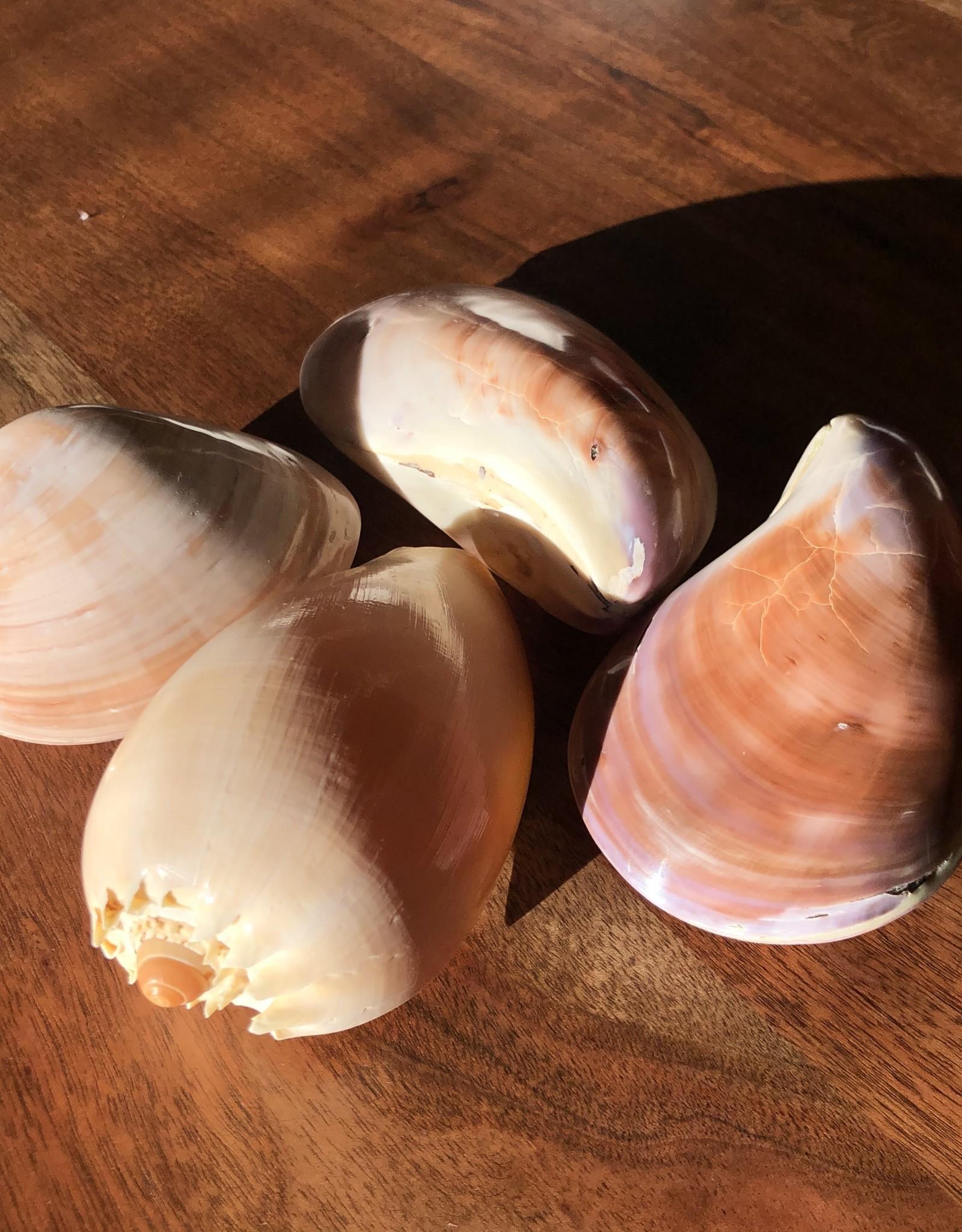 Indaba Shells Large