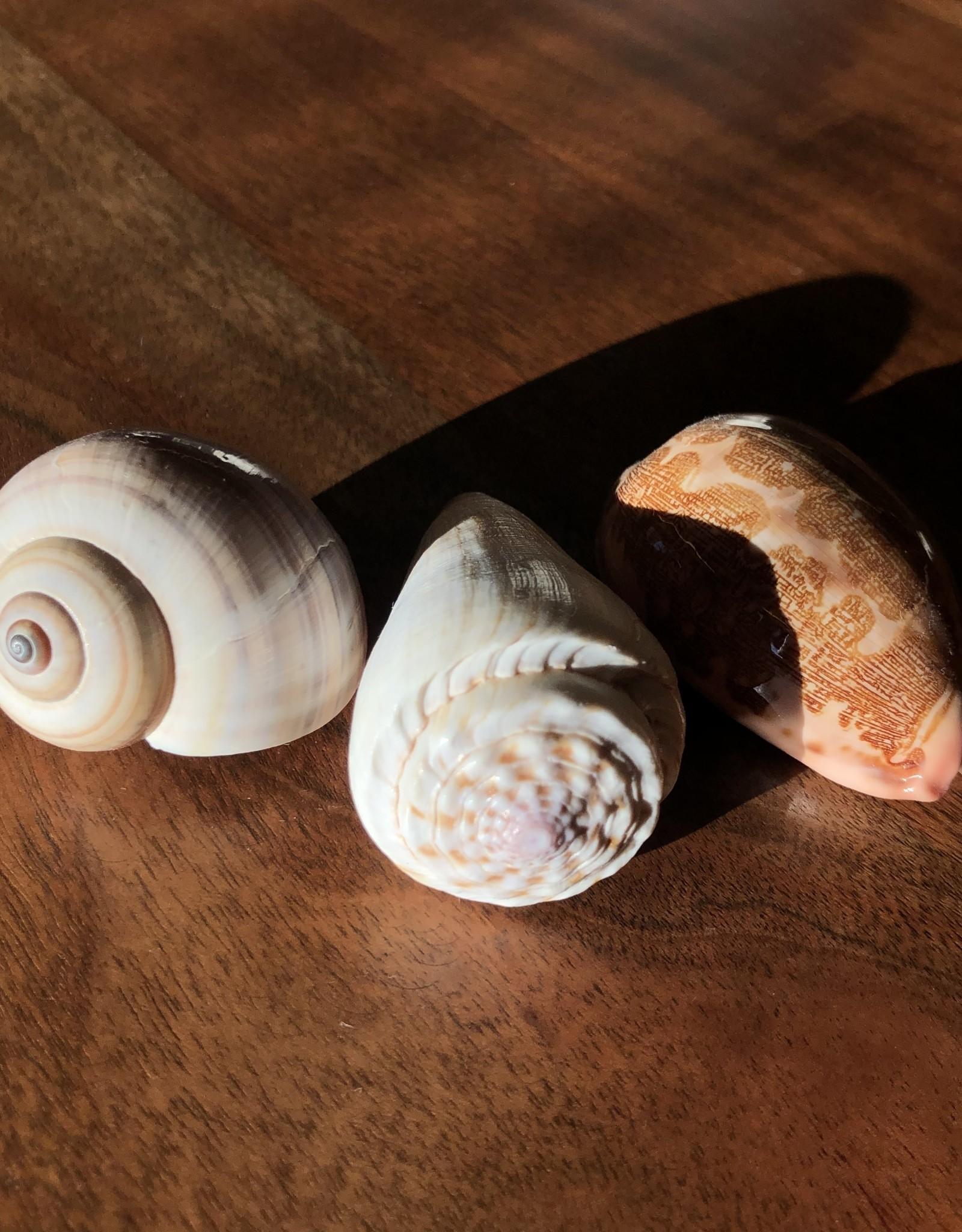 Indaba Shells Medium