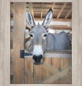 Streamline Art Curious Donkey 12 x 16