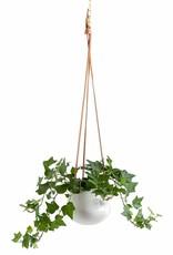 "Planter Torre & Tagus Hanging Ceramic Ashbury White 5"" 902919A"