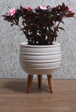 Cathay Planter Cathay Jocey Matte White 08-1992