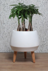 Cathay Planter Cathay Neve Matte White 08-1991