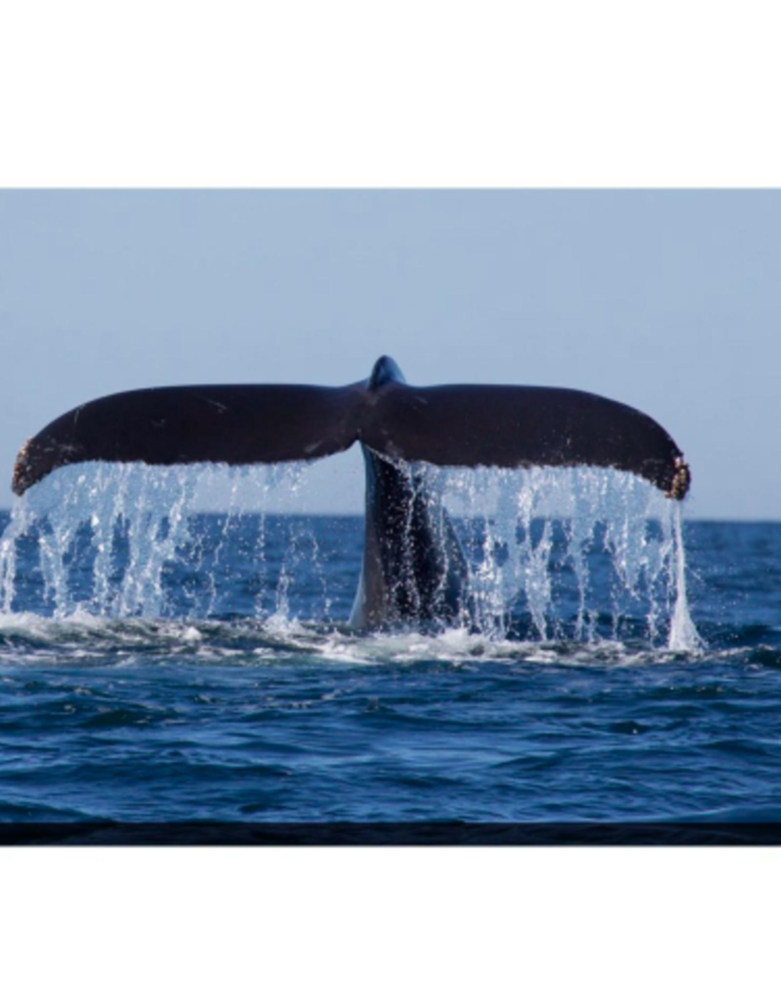 Streamline Art Humpback Whale 38 x 60