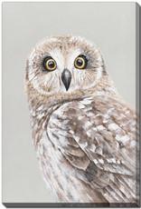 Streamline Art Hawk Owl 24 x 36