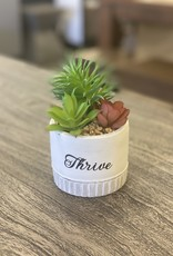 Planters Frans Koppers Expression Thrive