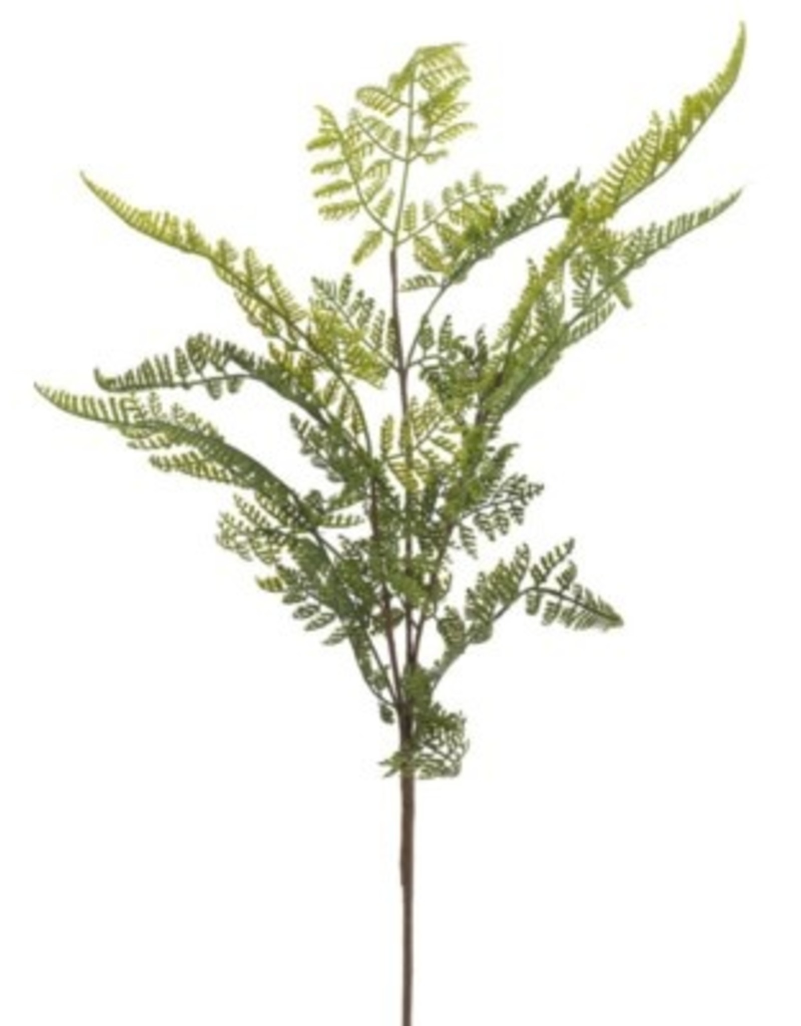 Plant PC Spray Lace Fern Green/Brown