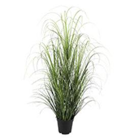 "Plant Danson Grass In Black Plastic Pot 39"" 18849"