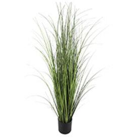 "Plant Danson Grass In Black Plastic Pot 60"" 18851"