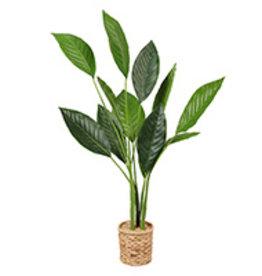 "Plant Danson Potted Bird Of Paradise  43"" 21735"