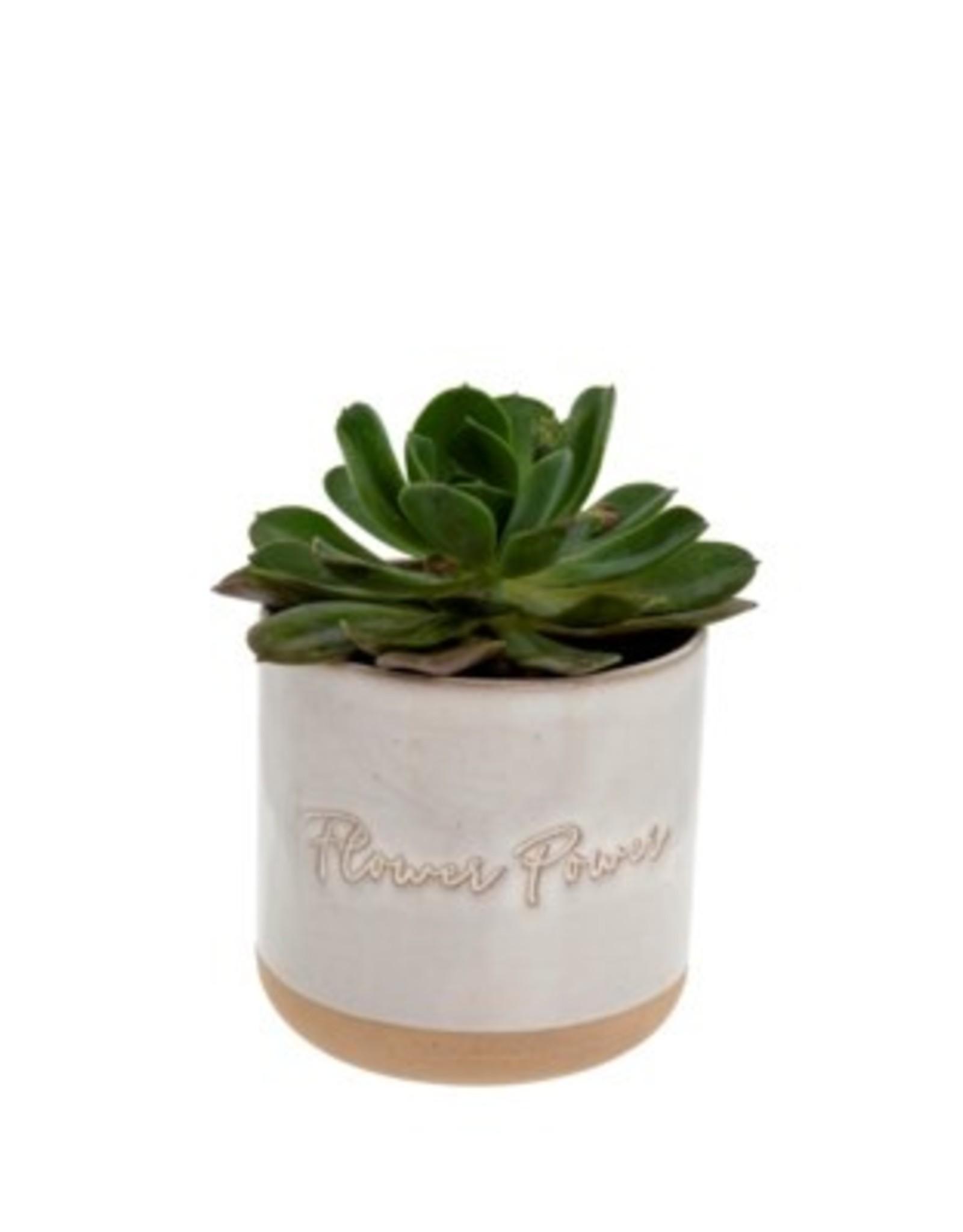 Indaba Planter Pot Indaba Flower Power  3-9311